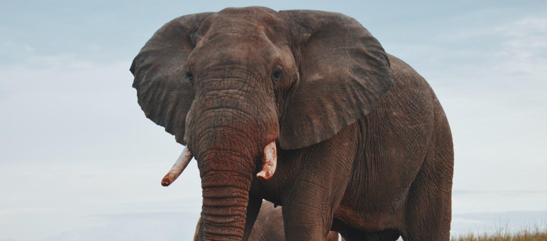 大象的AI之舞